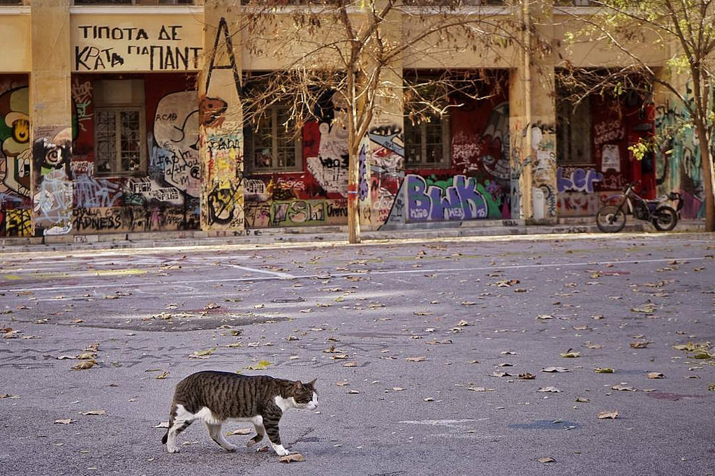 A cat walks past a wall covered in graffiti in Athens, Greece. Credit: Gavriil Papadiotis/Flickr CC BY-ND 2.0