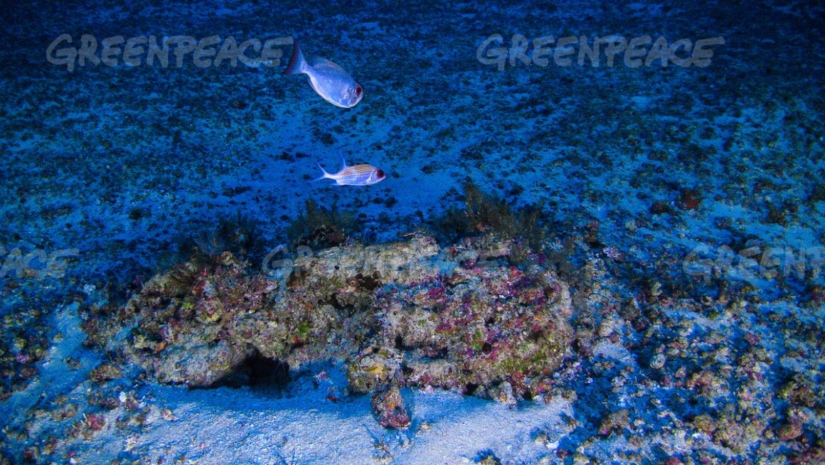 A view of the Amazon reef underwater. Credit: Divulgação/Greenpeace