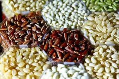 Rice grains. Credit: Wikimedia