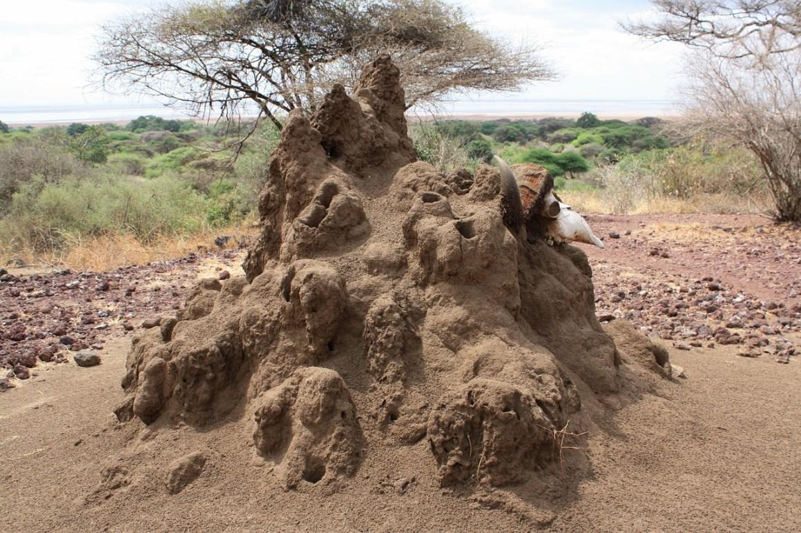 A termite mound. Credit: pompi/pixabay