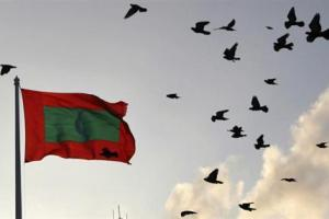 A Maldives national flag flutters as pigeons fly past during the morning in Male February 8, 2012. Credit: Reuters/Dinuka Liyanawatte