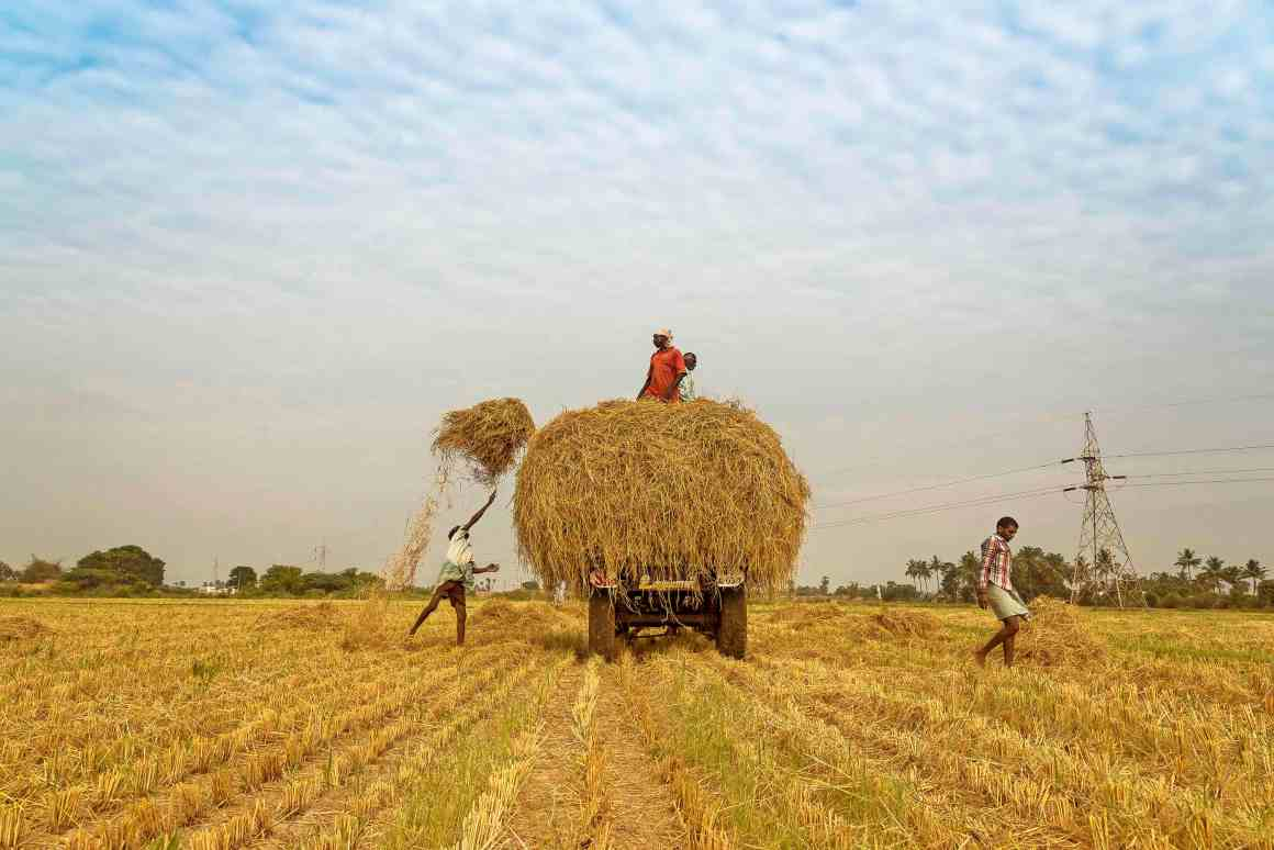 The Pradhan Mantri Fasal Bima Yojna is more a profit-making enterprise for private companies than an insurance scheme for farmers. Credit: Well-Bred Kannan (WBK Photography)/Flickr CC BY-NC-ND 2.0