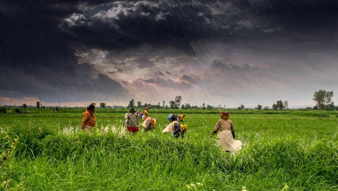 The rain comes down over Jamonia Johar, Madhya Pradesh, in July 2013. Credit: tataimitra/Flickr, CC BY 2.0