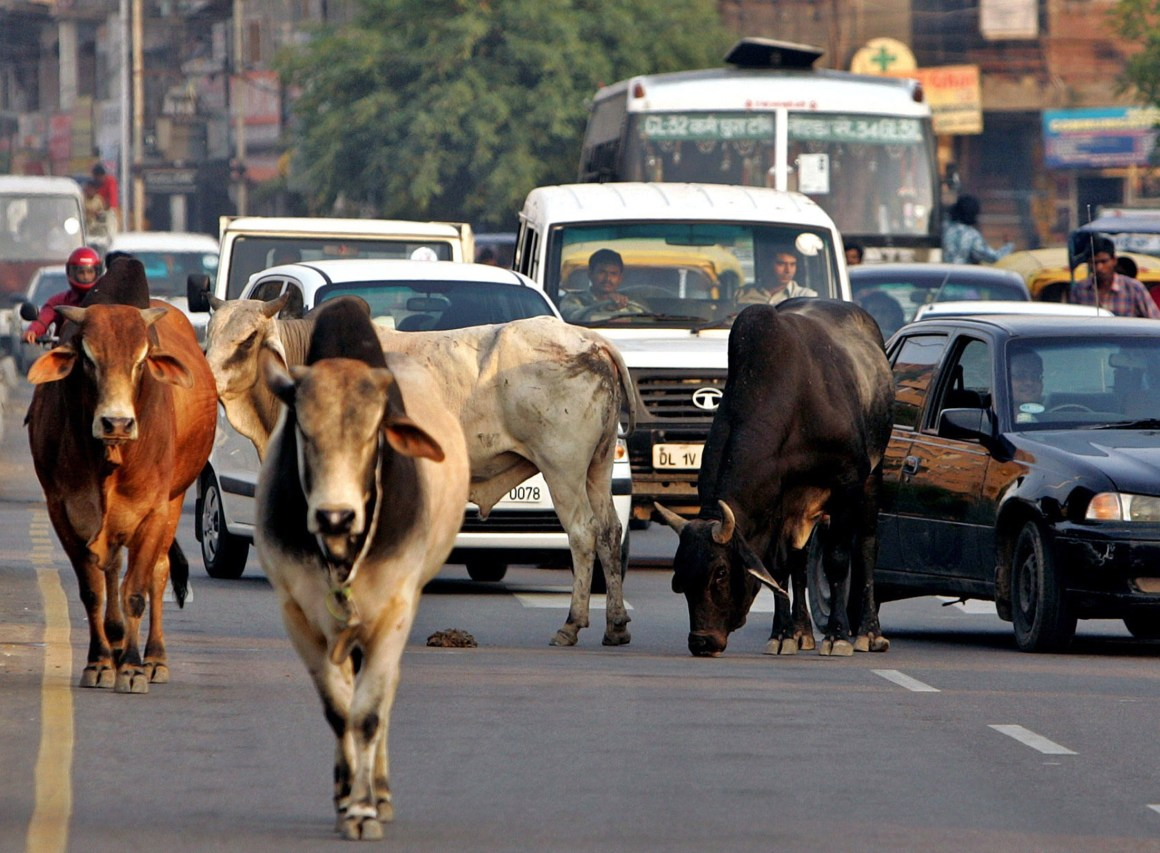 The air of illegality surrounding 'all things cow', dead or alive, play an important part in the making of vigilante violence Credit: Reuters/Kamal Kishore
