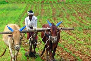 The state government wanted to expedite delivery of the farm loan waiver. Credit: PTI