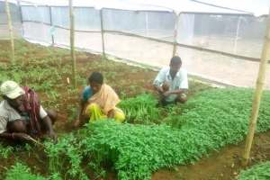 Farmers tending to a vegetable nursery in Gumla district of Jharkhand. (Photo by Ashok Kumar)