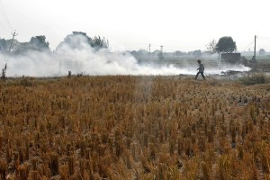 A man burns paddy waste stubble in a field on the outskirts of Chandigarh, November 8, 2016. Credit: Reuters