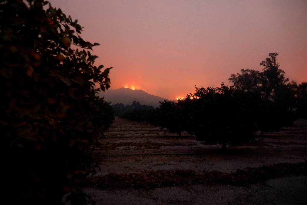 Wildfire flames burn on a hillside as fruit trees stand in a grove during the Thomas Fire near Montecito, California, US December 12, 2017. redit: Reuters/Patrick T Fallon