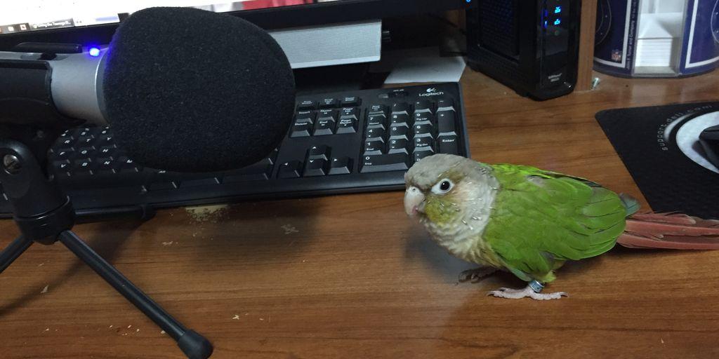 lulu-podcast