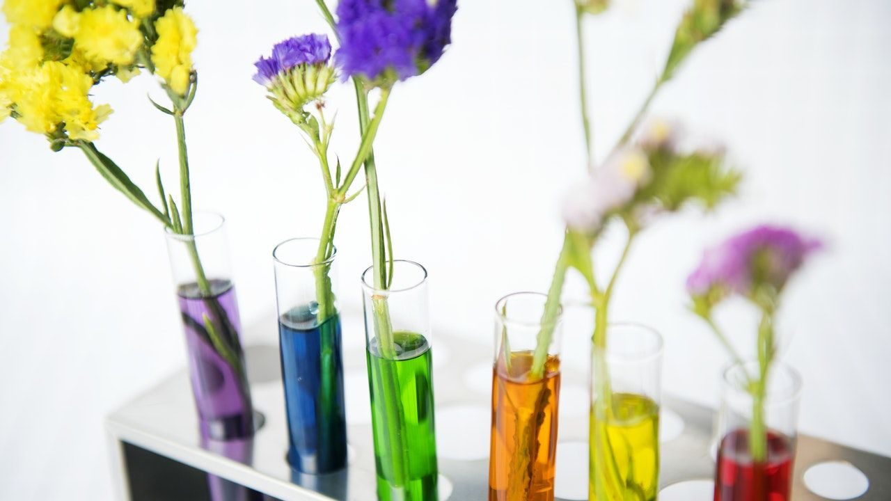 Various flowers in test tubes filled with colored water - How to Include STEM in Your Homeschooling Every Day