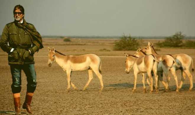 Donkeys-ad 2