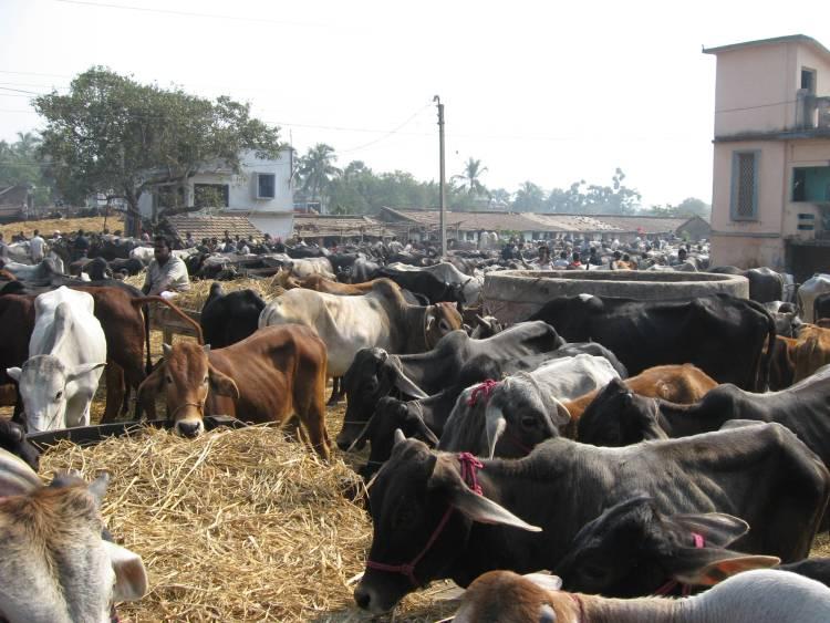 Cattle Market Wikimedia Commans
