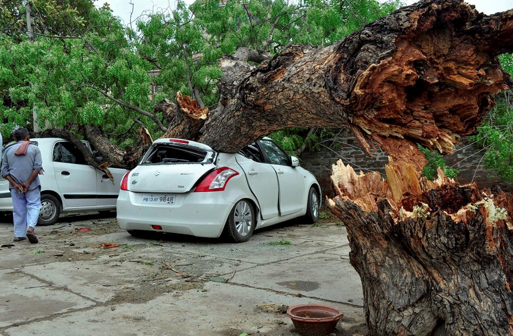 Patiala: Damaged cars after a tree fell on them due to an unexpected storm in Patiala on Wednesday. PTI Photo (PTI5_2_2018_000159B)
