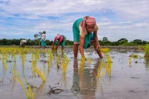 Baska: Farmers plant paddy saplings in a field at Boglamari, in Baska district of Assam on Wednesday, July 11, 2018. (PTI Photo) (PTI7_11_2018_000049B)