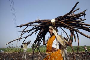 Woman Sugarcane Farm Reuters