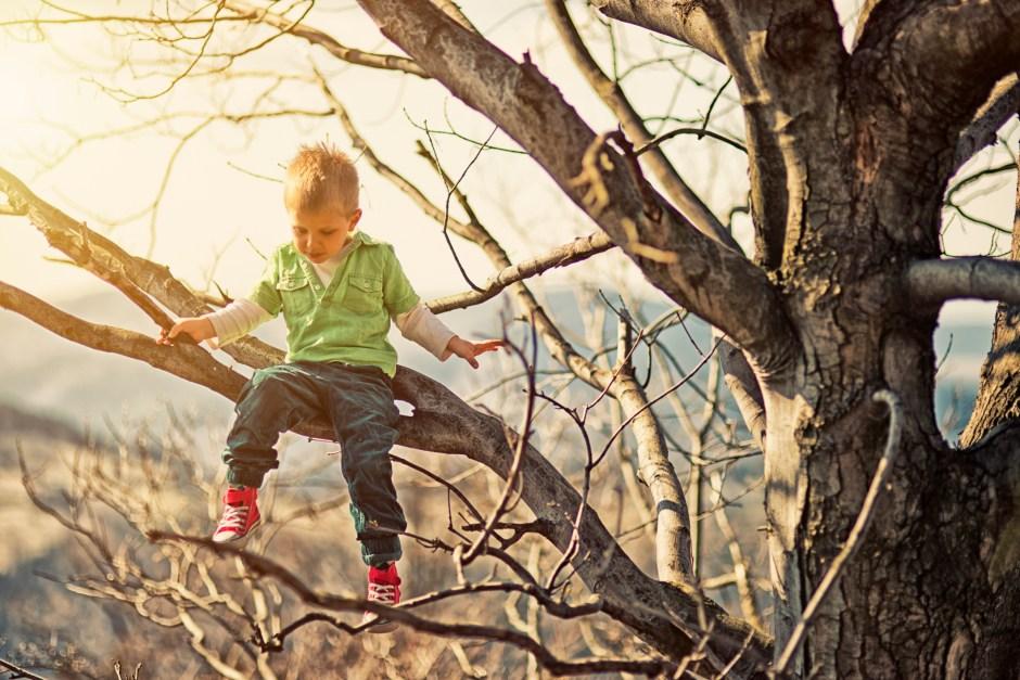 The Reason Kids Climb Trees