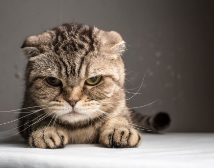 We Often Receive The Same Attitude We Give Off: Lessons From My Cats