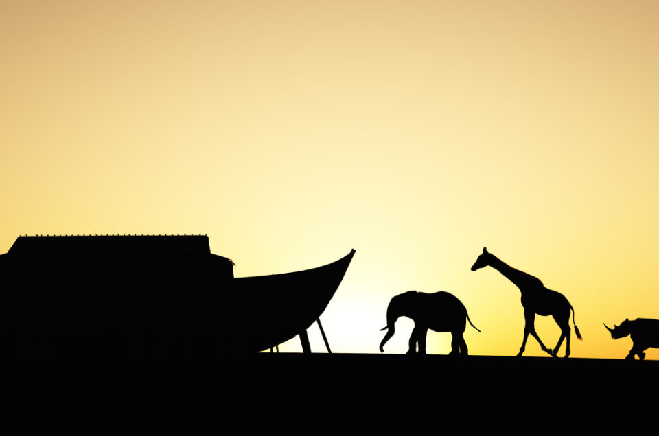 Noah's Ark silhouette with animals walking towards it. Includes an elephant, giraffe,rhino and tiger.