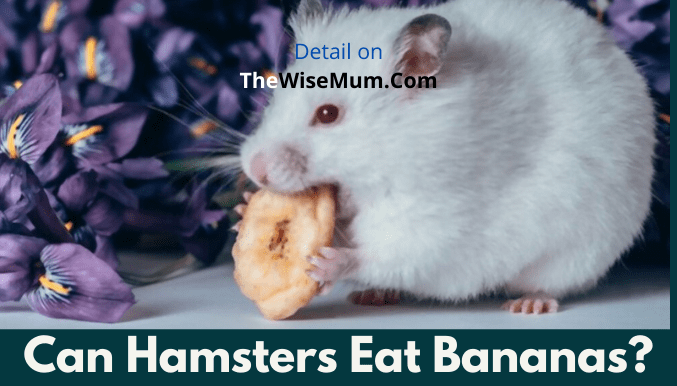 Can Hamsters Eat Bananas? How Much?