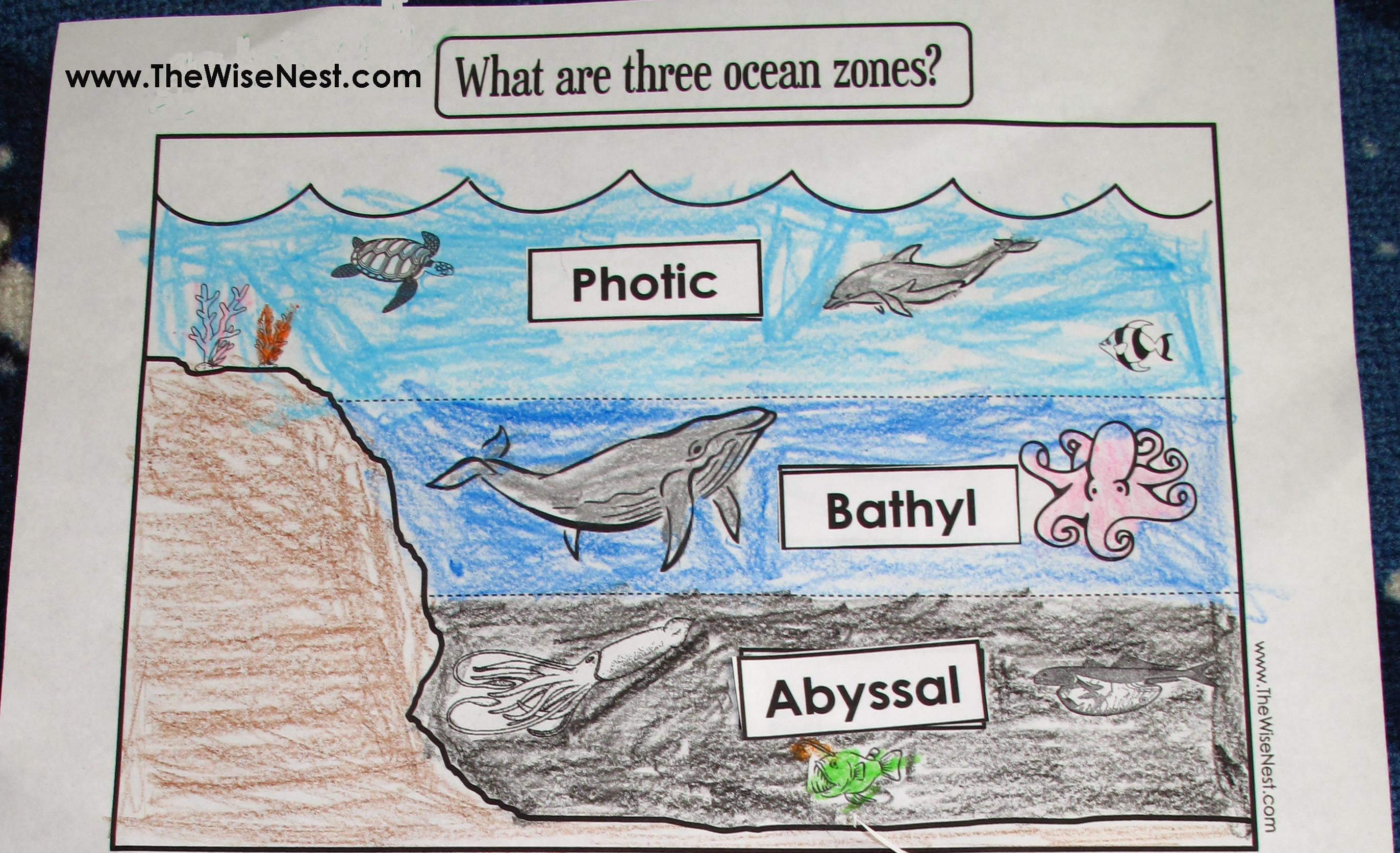 Ocean Zones To Label And Color