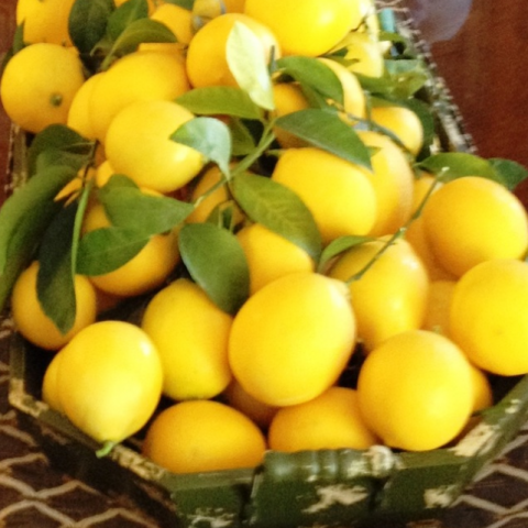 meyer lemon patio tree the wishing