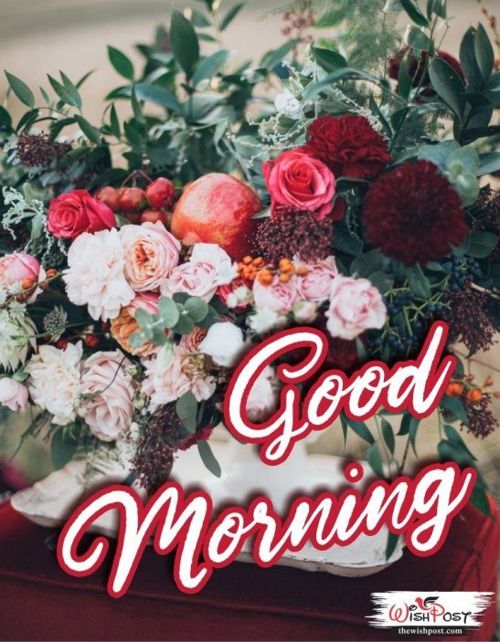 beautiful-good-morning-flowers-gift-greetings-images-pics-photos-pictures-wishes-wallpapers-free-download