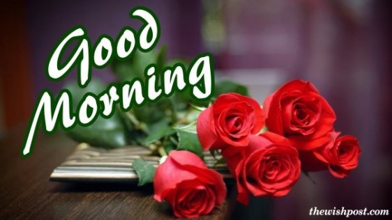 beautiful-good-morning-fresh-red-rose-flower-wallpaper-for-love-wishing-greetings-e-cards-pictures-Images-pics-photo-for-sharing-on-social-media-free-download