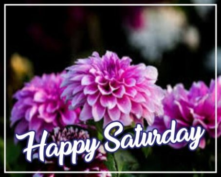 beautiful-happy-saturday-flower-wishes-greetings-wallpaper-pictures-wishing-images-free-download
