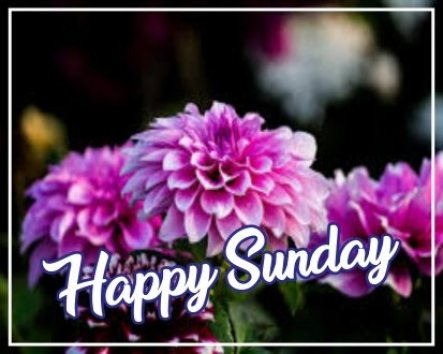 best-happy-sunday-flowers-hd-images-wishes-greetings-wishing-pictures-free-download