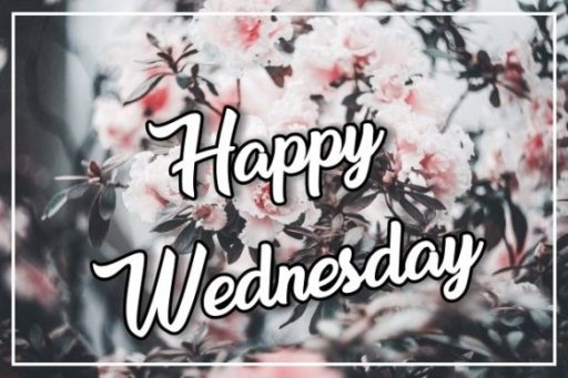 free-happy-wednesday-flowers-wishes-hd-wallpapers-greetings-images-pictures-download
