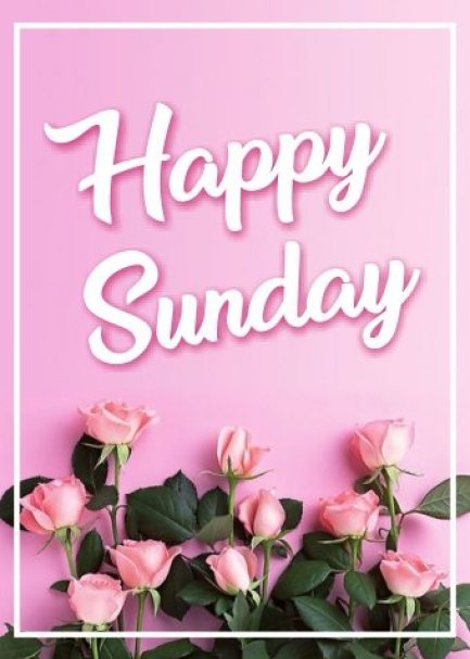 happy-sunday-pink-flowers-wishing-greetings-cards-wishes-images-pictures-wallpapers-free-download-for-social-media