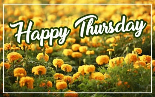 happy-thursday-flowers-wallpapers-pictures-wishes-greetings-images-wishes-for-facebook-whatsapp-status-free-download