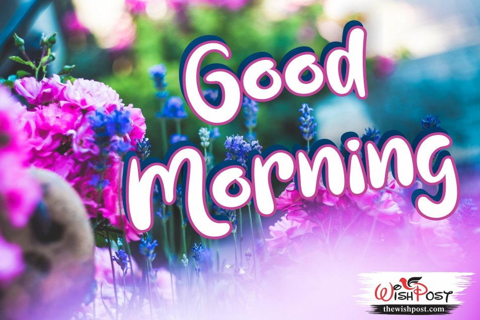 35 Best Good Morning Wishes Hd Images For 2020 The Wish Post