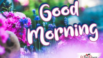 most-beautiful-good-morning-flowers-images-hd-pics-photos-picture-wishes-wallpaper-facebook