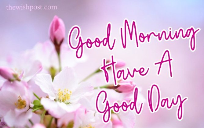 elegant-good-morning-have-a-good-day-with-pink-flowers-images-wallpaper-wishing-pics-greeting-cards-pictures-for-friends-free-download