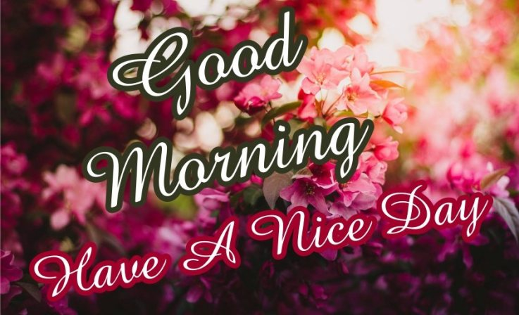 elegant-good-morning-have-a-nice-day-with-flowers-sky-images-wallpaper-wishing-pics-greeting-cards-pictures-for-friends-free-download