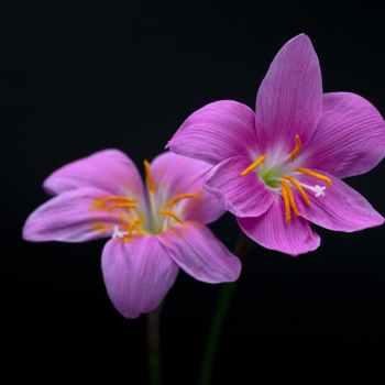 summer garden leaf flower