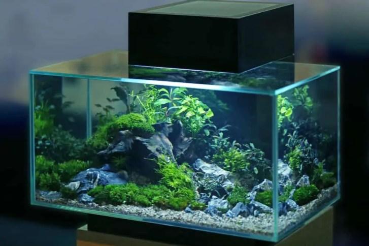 The best 10 gallon fish tank