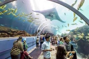 People in Georgia Aquarium Tunnel with stingray overhead
