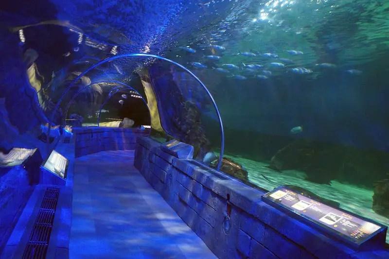 Aquarium tunnel at sea life in minnesota