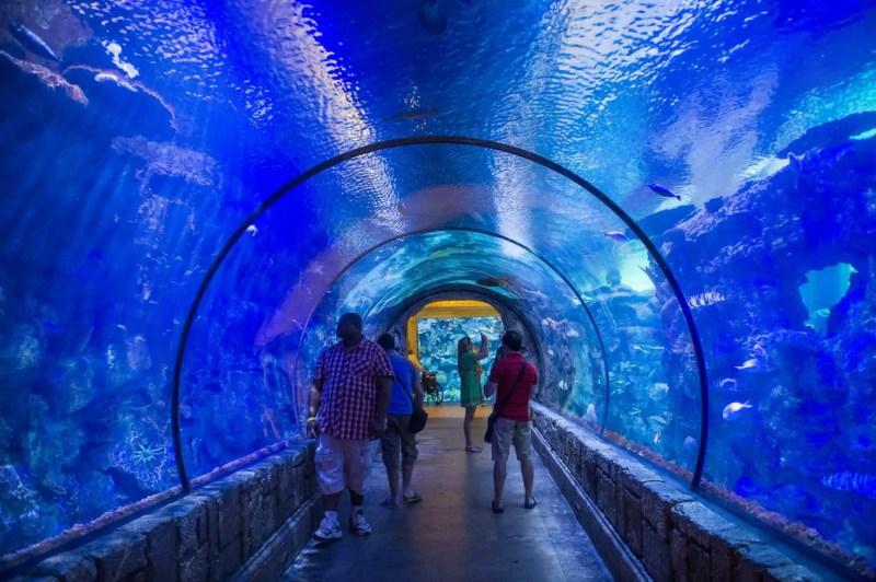 Shark tunnel at the shark reef aquarium in las vegas nevada