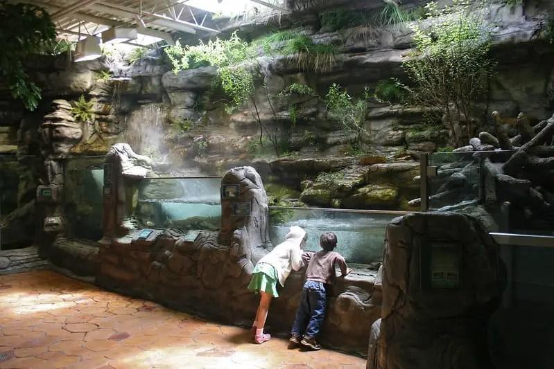Two children looking into the ozark stream exhibit at the oklahoma aquarium