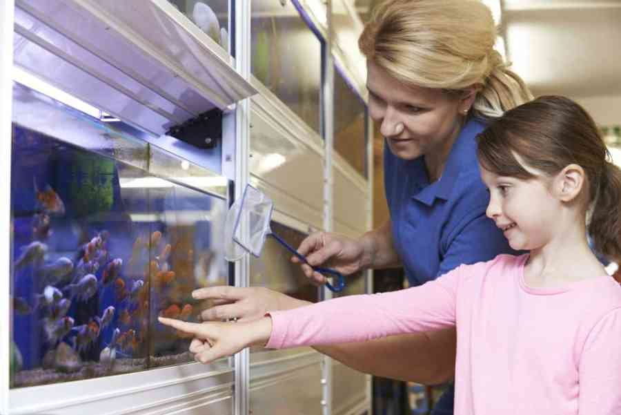 Little girl pointing at fish at pet store