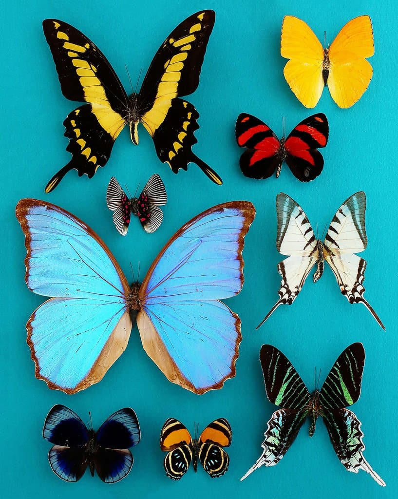 picture of various butterflies
