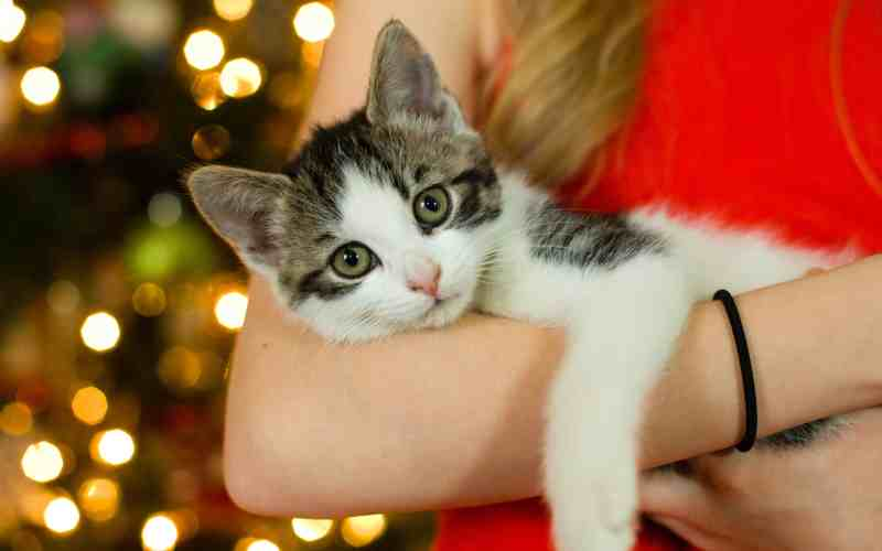how to have a merry and safe christmas with kids and pets picture of a kitten