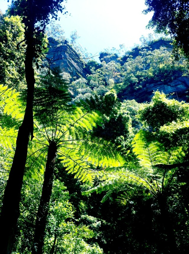Ferns in the Blue Mountains