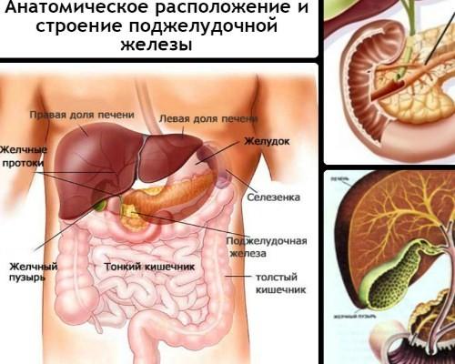 Как и где болит поджелудочная железа — симптомы, причины, лечение ...