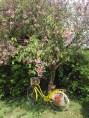 may day 050