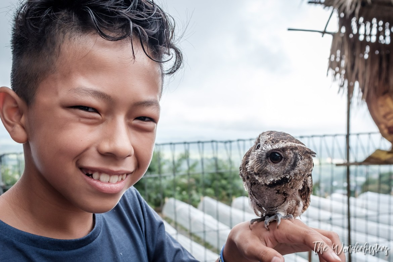 Owl encountered at a refuge