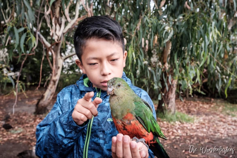 Parrots at Kennett River
